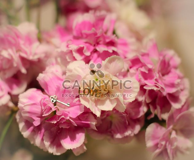 Pink cloves - Free image #342155