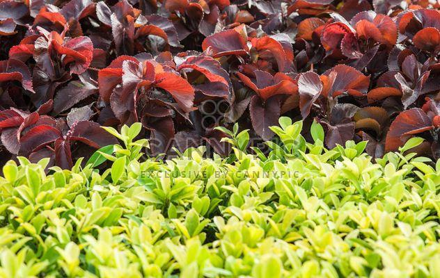Herbe verte et brune celastraceae - image gratuit #343855