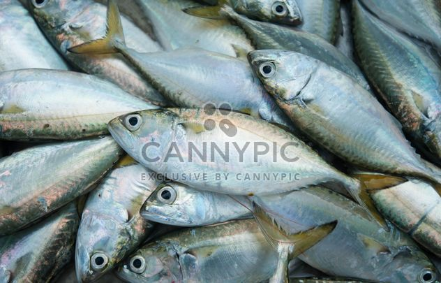 mackerel fish texture - Free image #344145