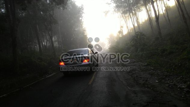 Car on a misty road through the wood - image gratuit #344185