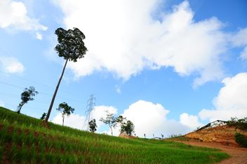Single trees on rice field - Free image #344195