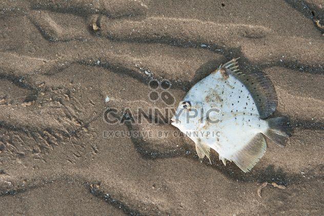 Weißer Fisch am Sandstrand - Kostenloses image #344585