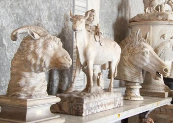 Sculptures of animals in museum, Vatican, Italy - бесплатный image #346185