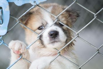Adorable white puppy behind bars - image #346195 gratis