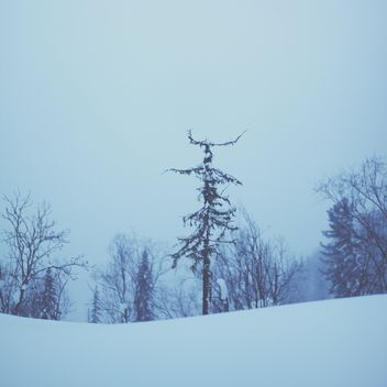 View on trees in winter forest, Taiga - Kostenloses image #347015