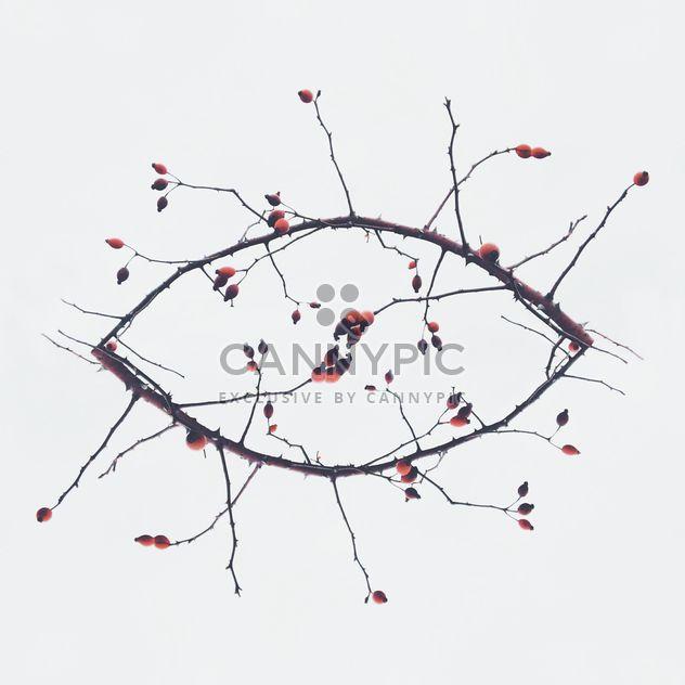 Niederlassungen in Form des Auges auf weißem Hintergrund - Kostenloses image #347185