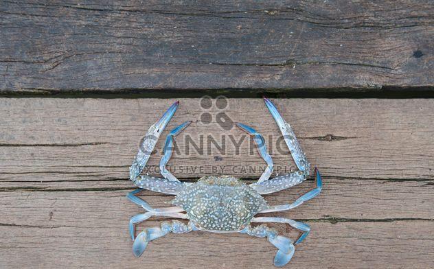 Gros plan de crabe de cheval sur fond en bois - image gratuit #347315