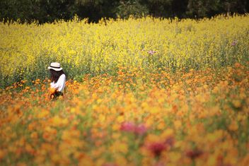 Stylish brunette girl in field of flowers - image #347325 gratis