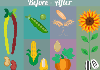 Seeds' and Plants' Vector Collection - Free vector #349135