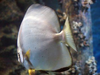 Aquarium marine - image #350215 gratis