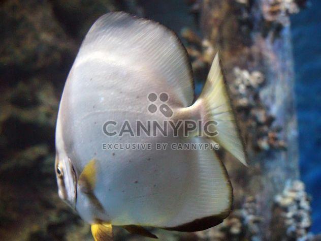 Aquarium marine - Free image #350215