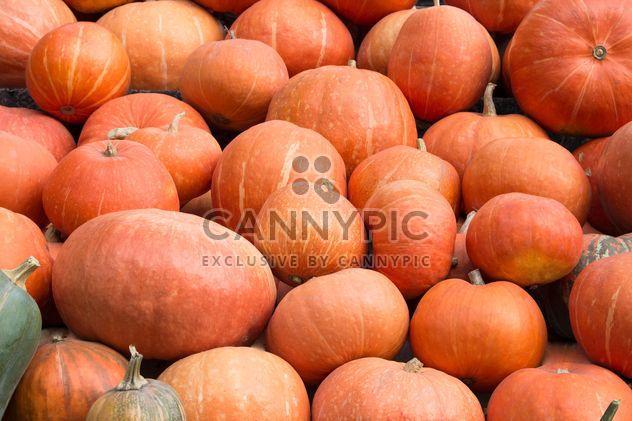 Куча спелые тыквы - бесплатный image #350285
