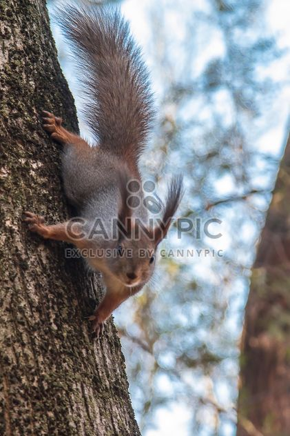 Cute squirrel on tree - Free image #350295