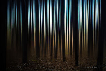Trees - image #351205 gratis
