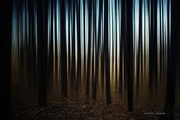 Trees - Kostenloses image #351205