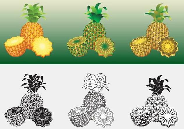 Ananas Vector - vector #353175 gratis