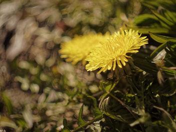 new plant - image gratuit #357905