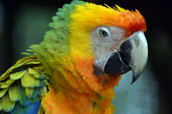 Colorful Macaw - image #358745 gratis