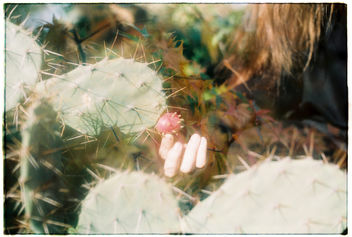 Film #swap with Amy Chu - image #362025 gratis