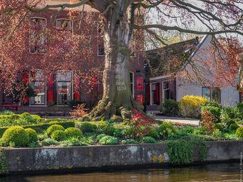 Beuk (Fagus sylvatica) Atropunicea - Museum Bisdom van Vliet - Haastrecht - Rijksmonument - Free image #363635