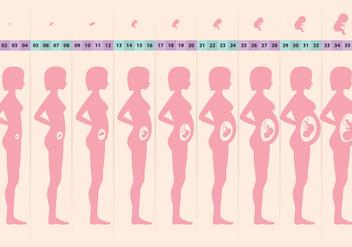 Pregnant Cycle - бесплатный vector #364935