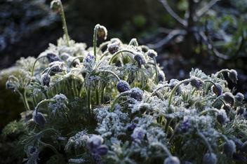 Frozen - image gratuit #365545