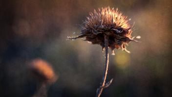 Early Morning Glow - image #368195 gratis