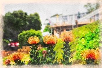Protea Leucospermum lineare, Capetown, South Africa - бесплатный image #370275