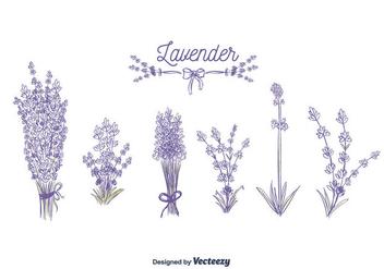 Lavender Vector - Kostenloses vector #375395