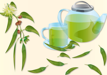 Eucalyptus Tea - vector #377905 gratis