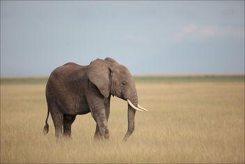 Elephanteau en brousse - Free image #383515
