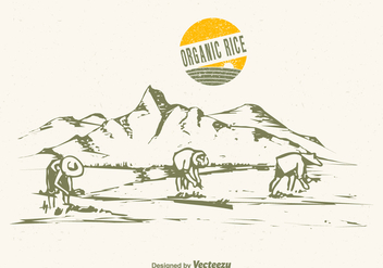 Free Drawn Rice Field Vector Illustration - бесплатный vector #387285