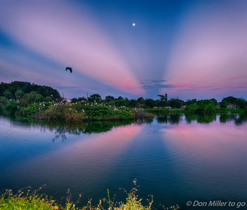 Anticrepuscular Rays at the Rookery - image #388555 gratis