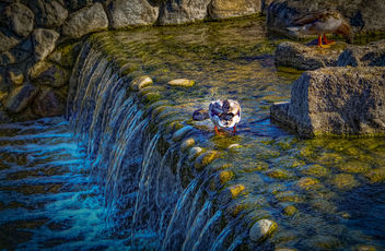 The pond & waterfall - image #388605 gratis