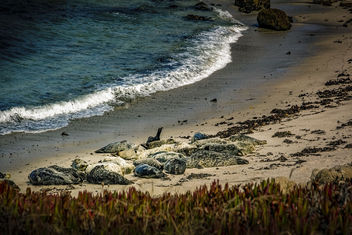 Group of seals - Free image #389355