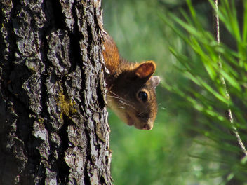 Squirrel! - Free image #389955