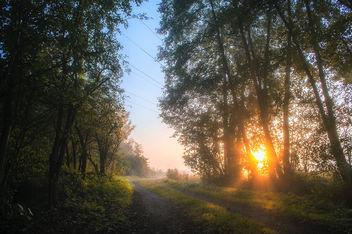 Sunrise Frost - Free image #391285