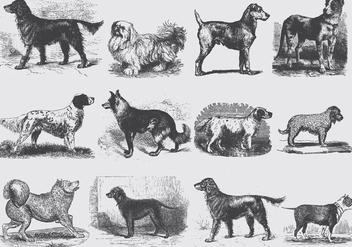 Vintage Gray Dog Illustrations - Kostenloses vector #395335