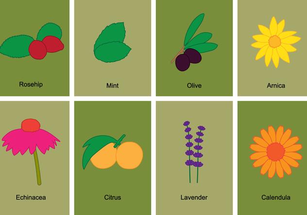 Herb Symbol Set - Free vector #395945