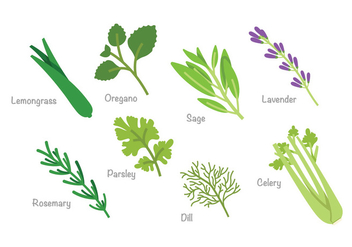 Herb Vector Pack - Free vector #398925