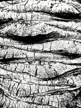 Texture - Free image #400055