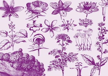 Purple Exotic Flower Illustrations - Free vector #401295