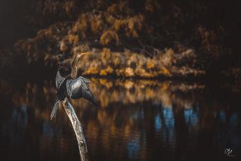 Snake Bird - Free image #402315