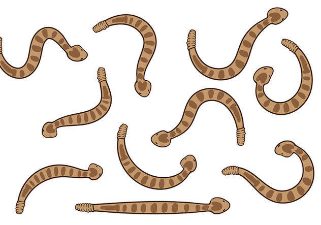 Rattlesnake Vector - бесплатный vector #402455