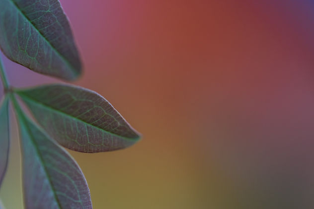 Leaves and colors ... - Free image #403535