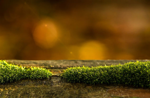 Moss on Wood - Free image #404235