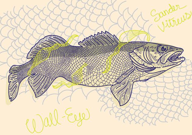 Free Walleye Vector Illustration - бесплатный vector #405395