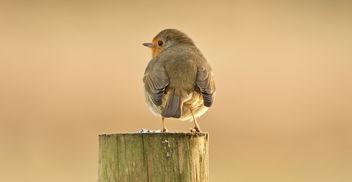 Robin(2) - бесплатный image #405615