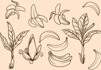 Free Hand Drawn Banana Tree Vector - vector #406055 gratis