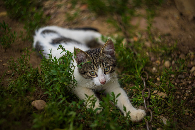 Little kitty - image #406205 gratis